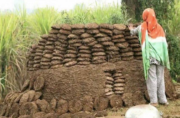 ভারতে গোবর চুরির অভিযোগে তদন্তে নামল পুলিশ