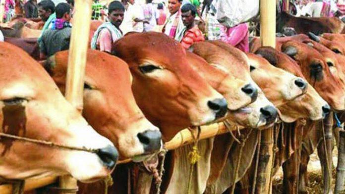 করোনা সংক্রমণ রোধে রংপুরে সর্ববৃহৎ লালবাগ পশুরহাটসহ ৩৫টি হাট বন্ধ ঘোষণা